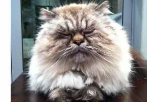 Parker the Cat